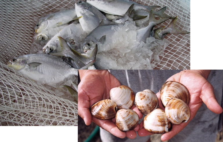 Article image for New policies, initiatives could advance U.S. aquaculture