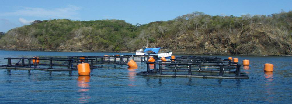 Article image for Integrated spotted red snapper aquaculture in Central America