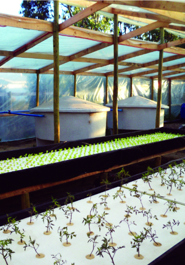 Article image for Integrated aquaponics systems evaluated for arid zones of Chile