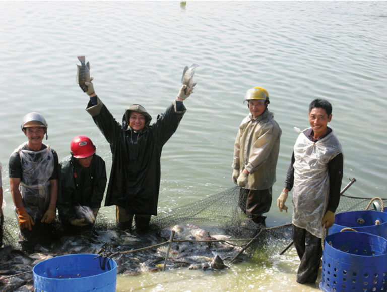Article image for Tilapia aquaculture in China