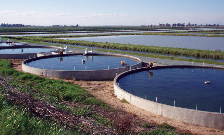 Article image for The Fishery: One farm, one fish at a time