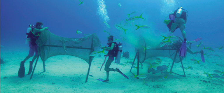 Article image for Protecting fish in shark-infested waters