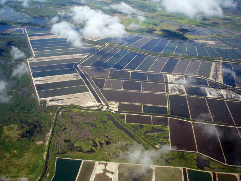 Article image for Shrimp genetic improvement in Ecuador