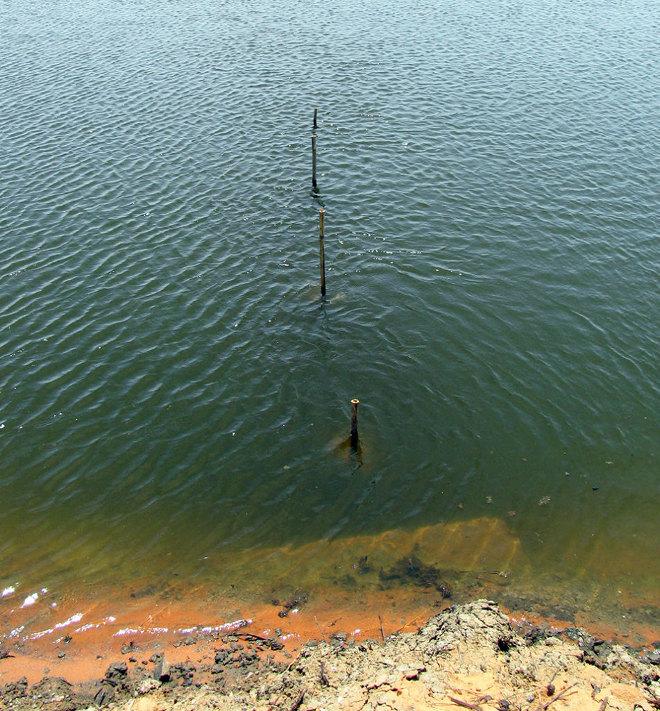 Article image for Turbidity removal from pond waters