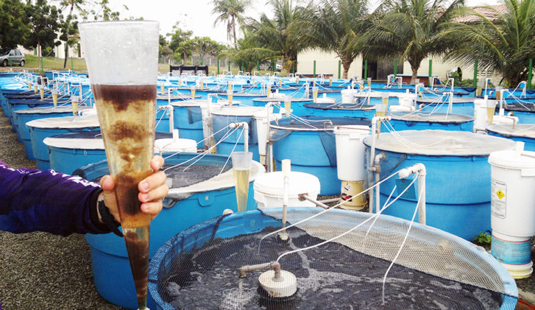 Article image for Settling chambers remove suspended solids, but limit biofloc in shrimp system