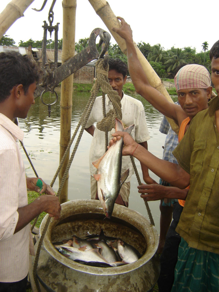 Article image for Non-native fish species present farming opportunities, challenges in Bangladesh