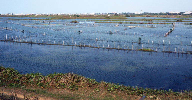 Article image for Learning from tradition: Integrated aquaculture
