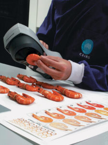 shrimp color