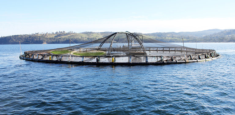 Article image for Innovation in aquaculture