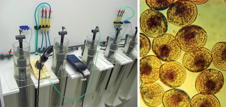 Article image for Cooperative project targets mollusc seed production