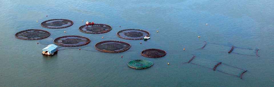 Article image for A look at integrated multi-trophic aquaculture