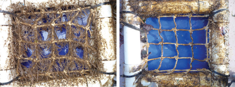 Article image for Tasmanian salmon farms examine net biofouling to reduce impacts