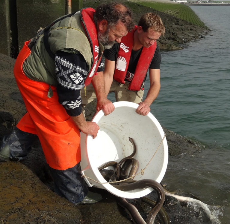 Article image for Eel production in Europe