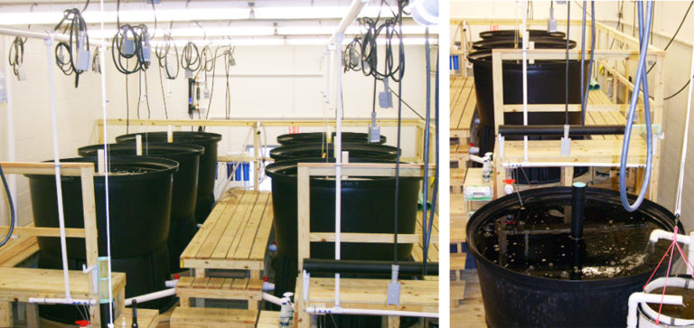 Article image for Large-scale production system for copepods
