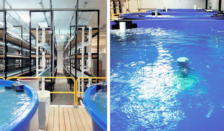 Article image for Recirculation meets aquaponics