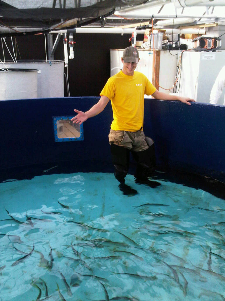 Article image for Mahimahi aquaculture revisited