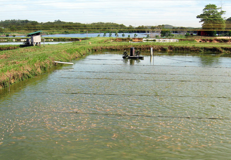 Article image for Assessing the carbon footprint of aquaculture