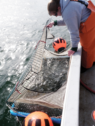 Article image for Flatfish conditioning for stock enhancement