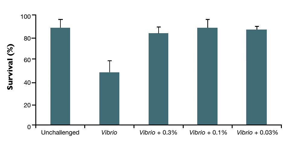 Vibrio harveyi
