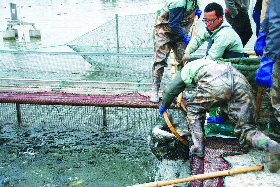 intensive pond aquaculture