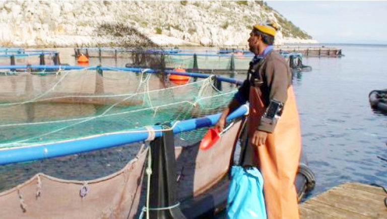 Article image for Data-driven management technology can transform aquaculture