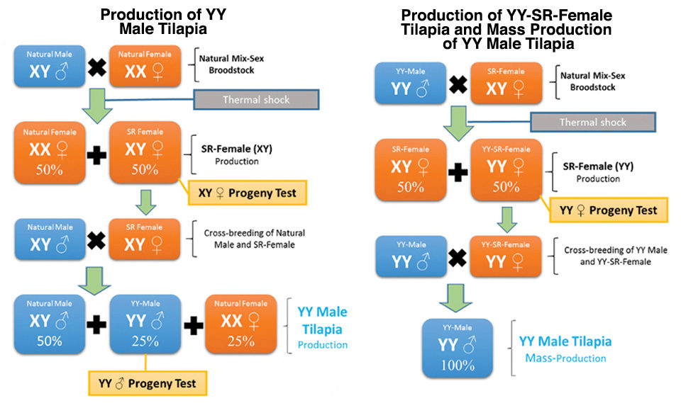 Schematic production