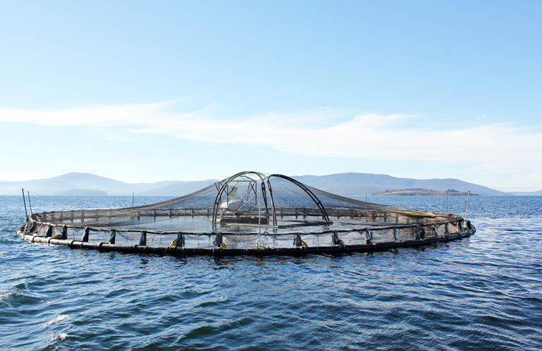 Article image for Legal issues affect offshore aquaculture development