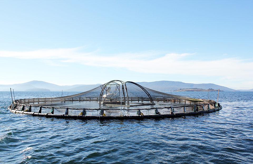 offshore aquaculture development