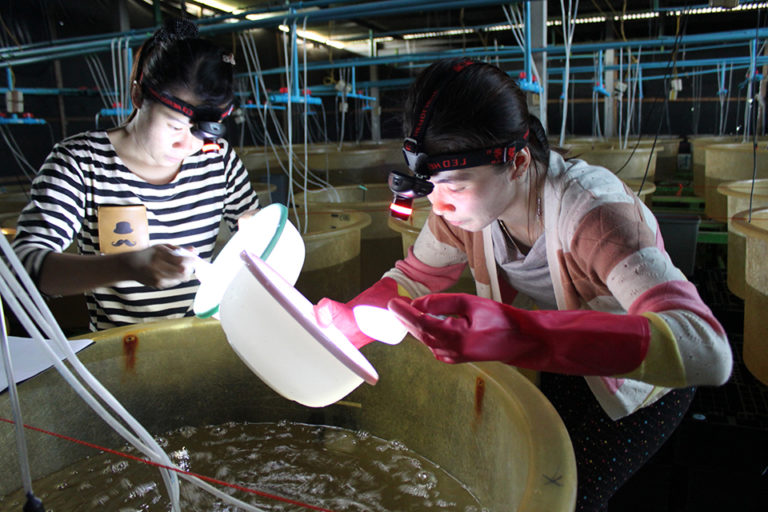 Article image for Maximizing profits of larval shrimp rearing