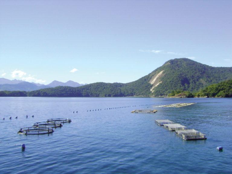 Article image for Mariculture projects in Rio de Janeiro