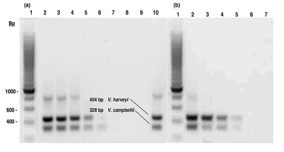 PCR assay
