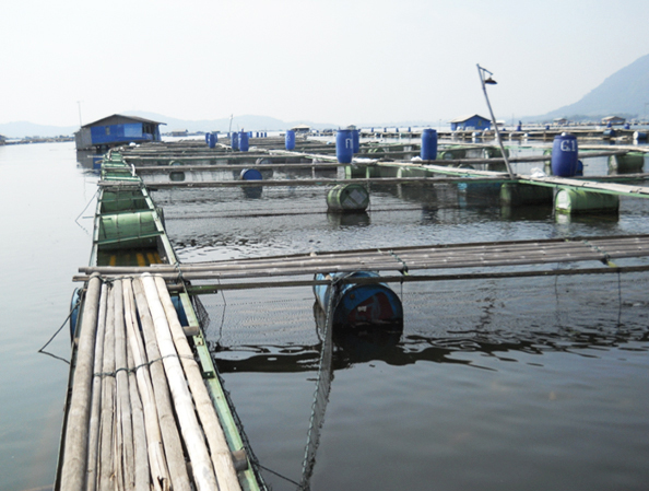 Article image for Modeling aquaculture carrying capacity in Southeast Asia