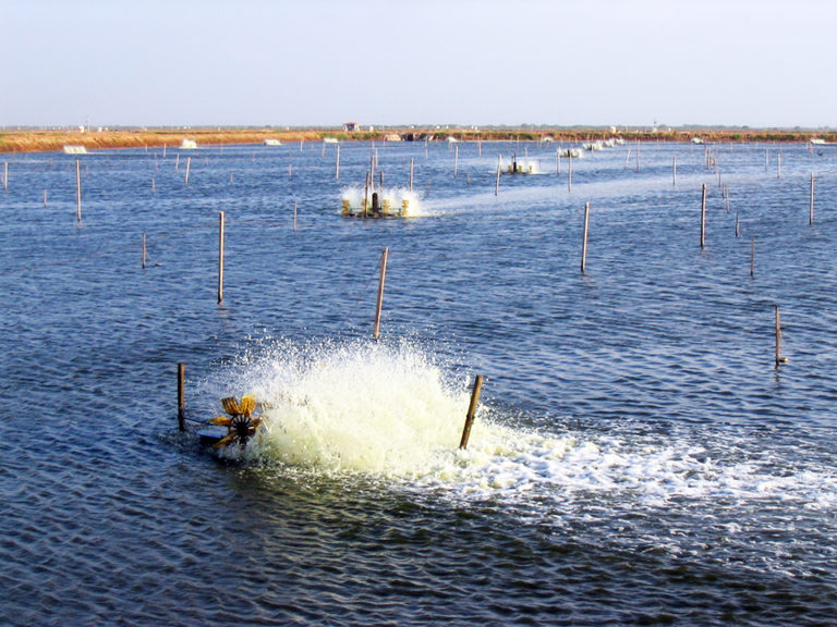 Article image for Species, pond size define aeration approaches