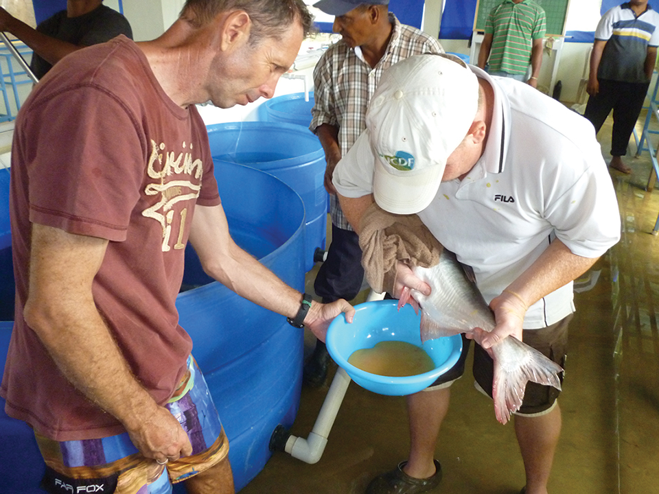 Article image for Pangasius culture in Western Hemisphere