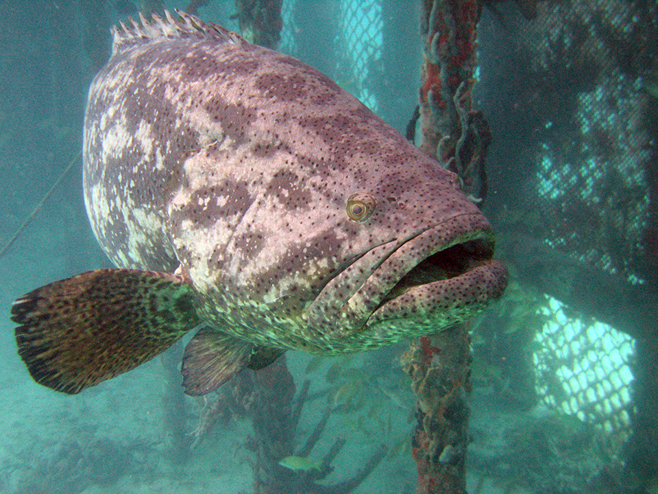 Article image for Colombia to diversify its aquaculture industry through marine fish culture