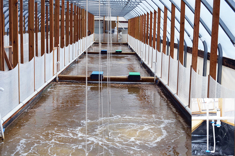 Article image for Nursery performance of Pacific white shrimp in zero-exchange biofloc systems