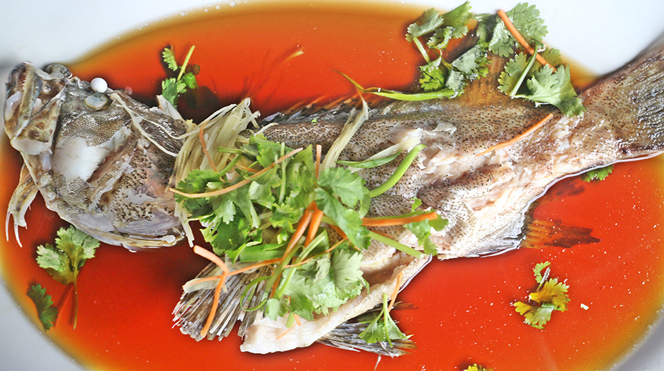 Article image for Soy trials replace fishmeal in grouper feeds