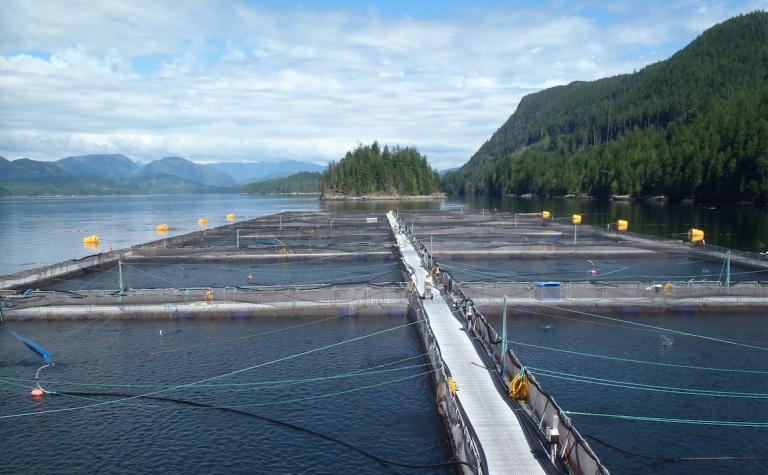 Featured image for Justin Trudeau's Mandate Detrimental to Responsible Aquaculture Movement