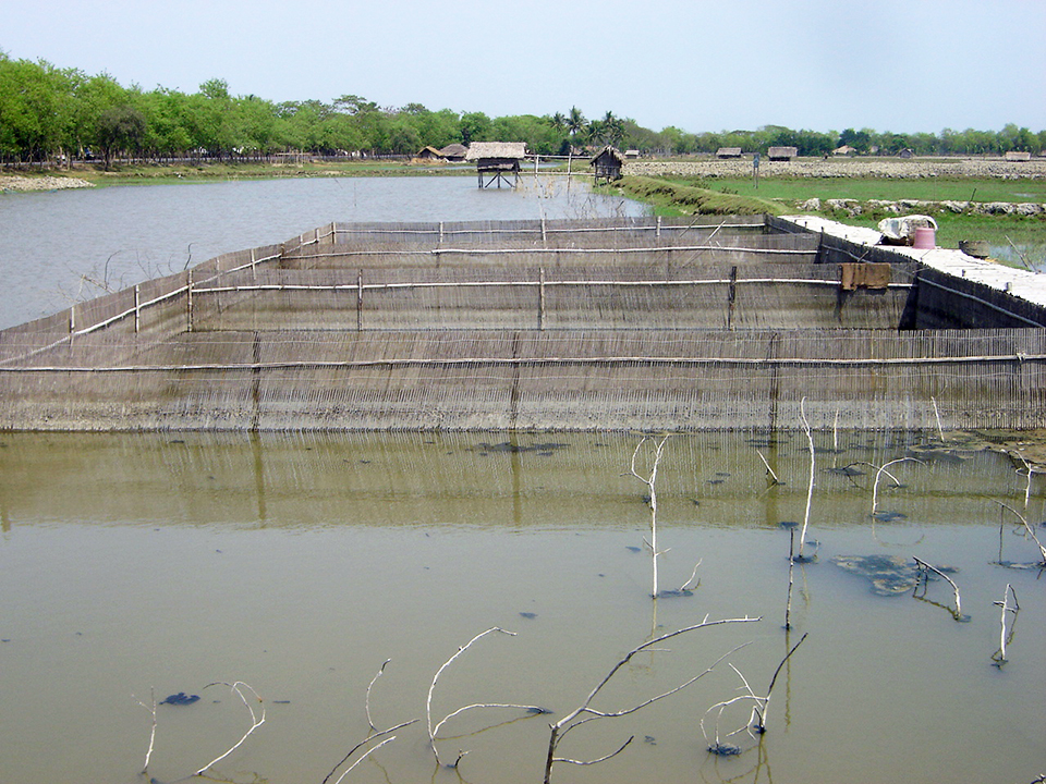 Article image for Coastal aquaculture in Bangladesh must adapt to climate change
