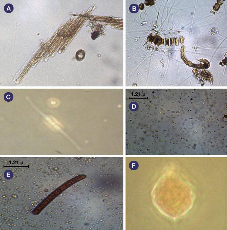 Plankton communities