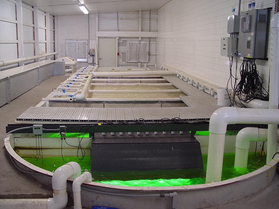 Flow rate estimation for RAS « Global Aquaculture Advocate