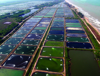 Aquaculture Ponds_cropped