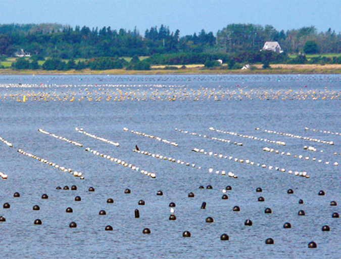 Article image for Aquaculture in Canada: status, perspectives