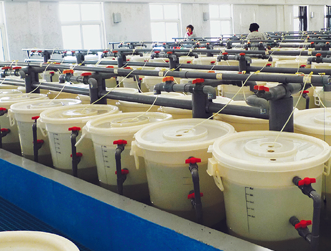 Article image for Shrimp farming in China: Lessons from its developmental history