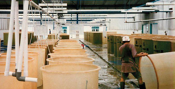 Vibrio control in shrimp farming: Part 1 « Global Aquaculture Advocate