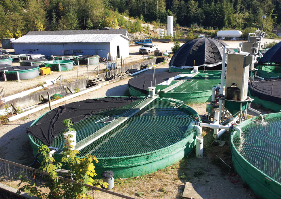 Article image for Sturgeon aquaculture in British Columbia: Are we there yet?