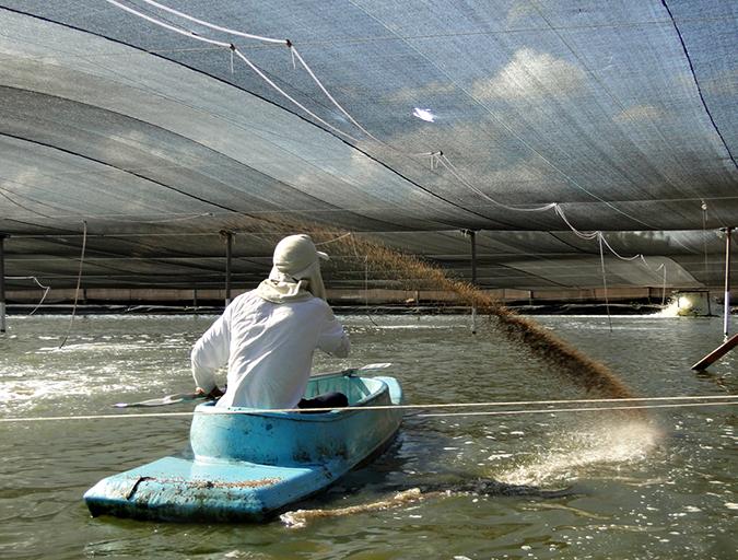 Article image for High-density shrimp producer wins innovation award