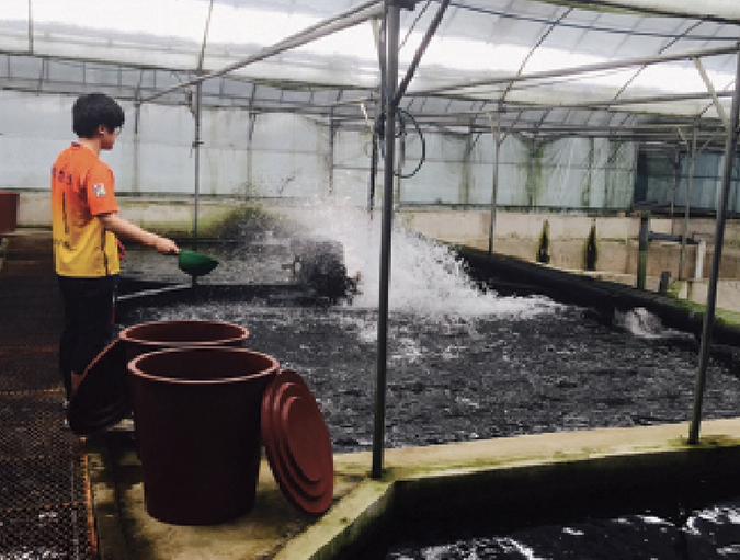 Article image for Natural feed additives enhance rainbow trout performance