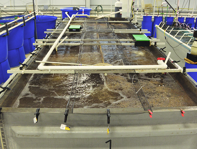 Article image for Indoor-raised shrimp find potential market in Kentucky test