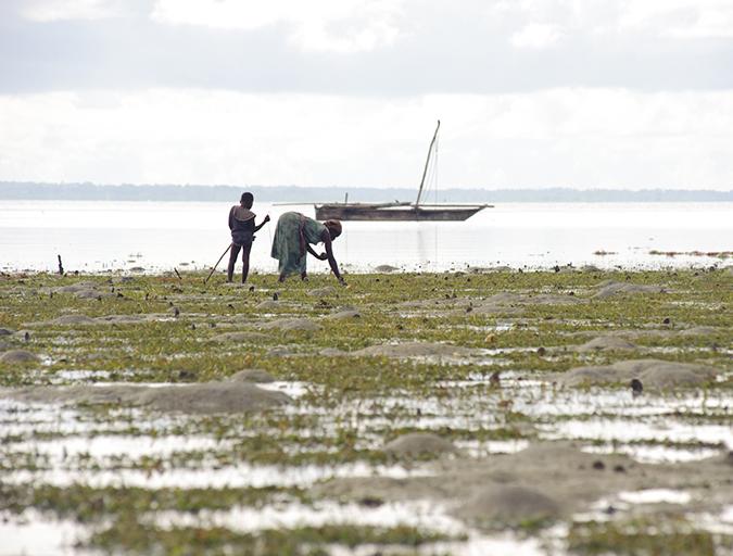 Article image for Ostras sociales: Comunidades inspirando acuacultura